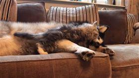 Milo喜歡找狗姐姐Niko打架。(圖/翻攝自IG帳號:lifewithmalamutes)