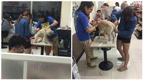 狗毛,超商,座位區,剃毛,衛生 圖/翻攝自臉書爆料公社