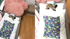 貓咪「蘭丸」在專用床上睡覺。(合成圖/翻攝自Twitter帳號:@marurii1107)