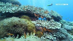 綠島珊瑚卵1600