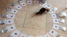 貓,幼貓.貓皇,飼主,飼料,鏟屎官,經驗,新手,圈,選擇 圖/翻射自今日頭條 https://goo.gl/3dHZBM