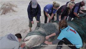 大白鯊遭獵食 圖/翻攝自Marine Dynamics臉書