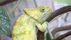 台首間爬蟲餐廳 用餐體驗摸蛇.抱南美蜥