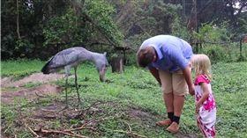 鞠躬,禮貌,Shoebill Stalk,烏干達野生動物教育中心,烏干達 圖/翻攝自臉書