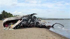 菲律賓,塑膠鯨魚屍骸(圖/翻攝自《環球網》)