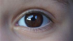 紙飛機,眼睛,視網膜,退化,瞎掉,受損,冰敷,送醫,課後輔導 圖/翻攝自pixabay https://goo.gl/V7MY4a
