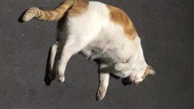 貓,萌,寵物,毛孩,愛上毛們 (圖片來源:臉書社團@貓咪也瘋狂俱樂部 CrazyCat club)