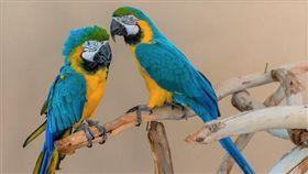 鳥,禽流感,鸚鵡。(圖非新聞當事人/攝影者benji2505,flickr CC License/網址http://bit.ly/2qmWbpZ)