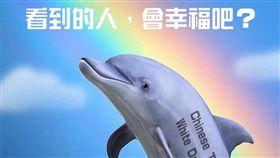 彩虹,白海豚(圖/翻攝自台灣賦格臉書粉絲專頁)