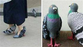 鴿子,高跟鞋,造型,外型,鞋子,女鞋,動物 (圖/翻攝自爆料公社)
