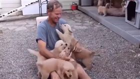黃金,狗,寵物,萌,愛上毛們,毛孩,爆衝 (圖片來源:ig@puppytrip)