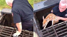 警察將小鹿救出。(合成圖/翻攝自Woodbridge Police Department臉書)