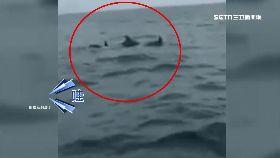K墾丁有海豚2400