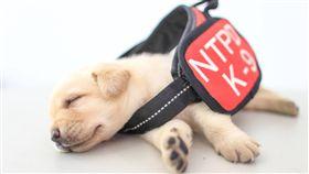 新北警犬隊、警犬、小狗、毛小孩(圖/翻射自NPA署長室)