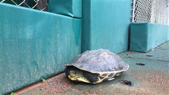 上午烏龜來作客 新莊球場比賽終開打