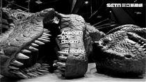 恐龍,展覽。