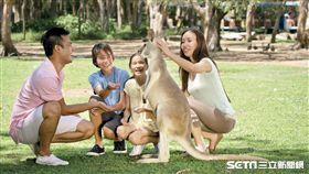 袋鼠,無尾熊,袋熊。(圖/昆士蘭州旅遊暨活動推廣局提供)