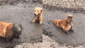 黃金獵犬庫柏把整顆頭埋進泥巴裡。(合成圖/翻攝自IG帳號:cooperandcharlie_co)