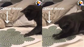 貓咪看到視錯圖暴怒。(圖/翻攝自臉書《The Dodo》)