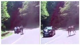 ▲馬匹逆向撞到轎車。(圖/翻攝自《eBaum's WORLD》) http://www.ebaumsworld.com/videos/horse-gets-hit-by-a-car-and-walks-it-off/85390955/