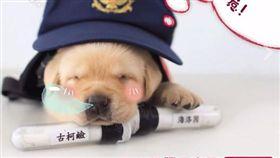 警犬,毛小孩,狗,緝毒犬,毒品 (圖/翻攝自NPA 署長室)
