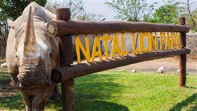 犀牛,盜獵,殺害,動物,犀牛角,Natal,動物園,Maxine (圖/翻攝自Natal Lion Park臉書)