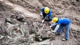 恐龍,化石,重慶,大陸,發掘,化石牆,侏儸紀公園 http://s.weibo.com/weibo/%E6%81%90%E9%BE%8D%E5%8C%96%E7%9F%B3%E7%89%86