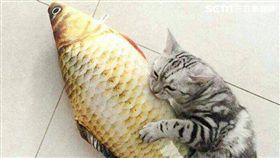 貓奴、狗奴看過來 最熱搜10大寵物商品在此(圖/奇摩)