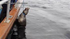 海獅遭漁網纏住脖子