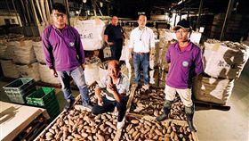 名家/商業周刊/地瓜農場經理人 平均35歲年薪上看百萬(勿用)