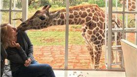 長頸鹿,Giraffe Manor,Naomi Watts,金剛 圖/翻攝自IG