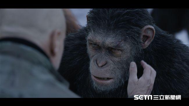 猩猩凱撒原來長這樣 全身上下都是…
