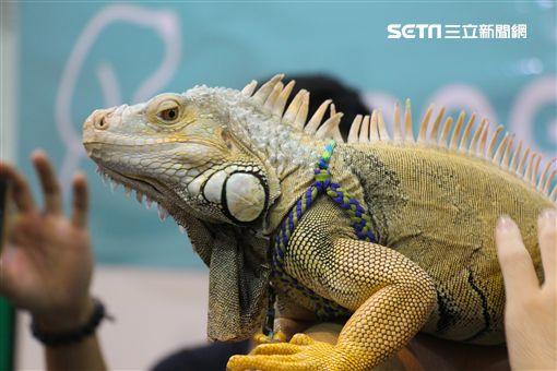 寵物,展覽,狗,貓,蜥蜴,爬蟲類,認養,領養,動物,毛小孩(攝影/記者林顥宗)