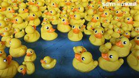 香港,香港海洋公園,黃色小鴨,夏水禮,沙雕/記者楊惟甯攝影