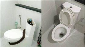 蟒蛇,蛇,廁所,馬桶,泰國,曼谷,Panarat Chaiyaboon 圖/翻攝自khaosodenglish