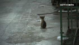 餵貓反被毆1200