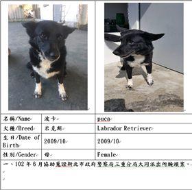退役搜救犬波卡-米克斯母狗。(圖/翻攝畫面)
