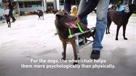 台灣工程師自製犬輪椅 癱瘓狗再次奔跑 圖/翻攝自Great Big Story臉書
