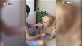 狗狗玩猜零食遊戲。