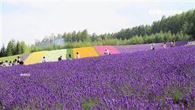 清倉價搶好康!夏季旅展開跑 去北海道3萬有找