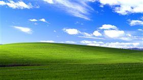 微軟,桌布,windowsXP,Charles O'Rear,根瘤蚜,葡萄酒,葡萄藤 圖/翻攝自YouTubeu影片 https://goo.gl/rSnhT5