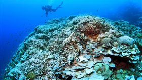 珊瑚,珊瑚礁。(圖/美聯社/達志影像)
