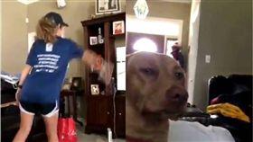 狗,汪星人,保齡球,洗溝,Wii,毛小孩 圖/翻攝自推特