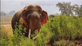 印度,新德里,Corbett,國家公園,大象,紅耳朵,Jagdeep Rajput,攝影(臉書 https://www.facebook.com/jagdeeprajputphotography/photos/a.1741220936149238.1073741828.1741220399482625/1949130672024929/?type=3&theater)