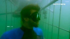 飛魚拚鯊魚1300