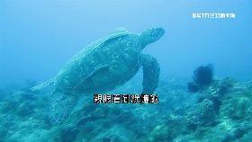 小琉球海龜1200