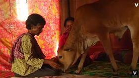 柬埔寨,老婦人,牛,結婚,牛老公(圖/翻攝自YouTube)