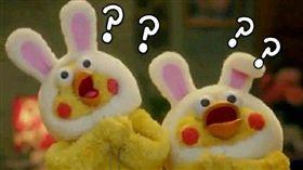 16:9 梗圖「鸚鵡兄弟」不只2隻 在日本出生還有專屬主題曲 圖/翻攝自微博