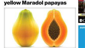 水果,消暑,木瓜,致命,沙門氏菌,感染,美國,住院,馬拉多爾,Maradol,汙染,腹瀉,發燒(圖/翻攝自CBS News) http://www.cbsnews.com/news/salmonella-outbreak-yellow-maradol-papayas/