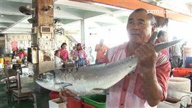 嘉義,東石漁港,虱目魚,漁民,養殖,野生